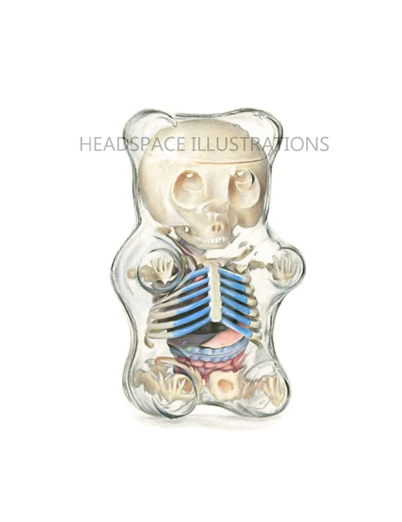 Gummybear Anatomy Colored Pencil Art Print By Headspace