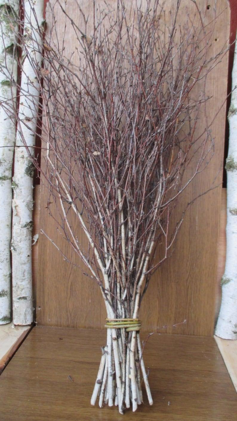 extra long birch twigs birch twigs birch tree branches image 0