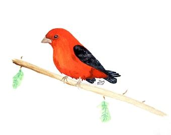 Orange Bird Print of Original Painting of Scarlet Tanager, Bird Watcher Gift, Colorful Animal Art, Giclee Print A5 A4 A3, Bird on Branch Art