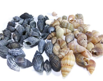 Natural sea shells Seashells decor 30 pcs sea shell from Black Sea Nautical decor Craft supplies & tools terrarium ornamental garden houses
