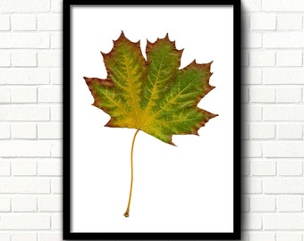 Autumn leaf print Fall leaf printable Maple leaf decor Autumn wall art Scandinavian art Nature print Thanksgiving decoration Nursery print