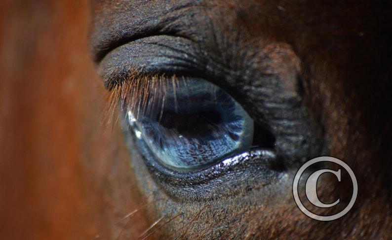 Equine Photography Horse Eye Photo Print