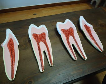 Vintage Dentist teeth Anatomical model science & medicine