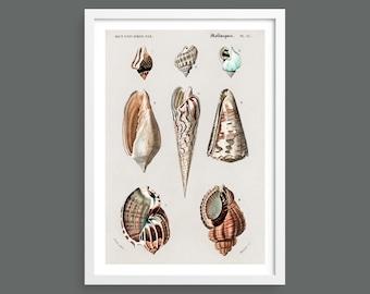 Shells vintage chart print | Nautical wall art | Scientific shell illustrations | Marine ocean life home decor | Beach house, bathroom decor