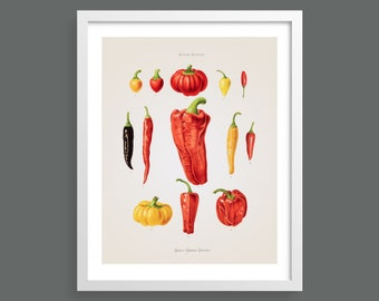 Chillis and Peppers | Album Benary | Antique botanical illustration print | Kitchen wall art | Gardening and seed poster, vintage home decor