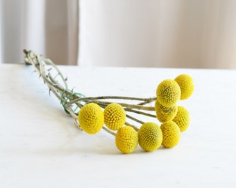 Billy Ball Bunch | Fresh Flower Bunches | Billy Button Bunch | Billy Buttons | Floral Bunch | Billy Ball Flowers | Billy Ball Dried
