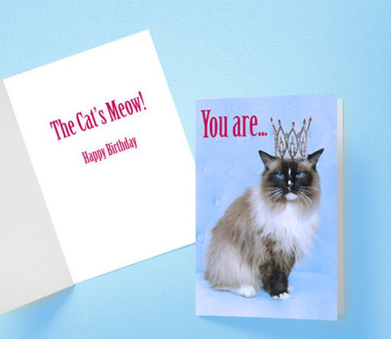 Funny Birthday Cards With Cat Photography Also Great Wall