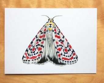 Original Moth Art. A6 Realistic insect drawing, entomology artwork. Lepidoptera