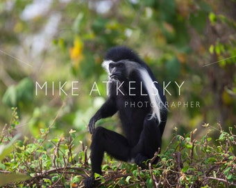Mike Atkelsky Photos