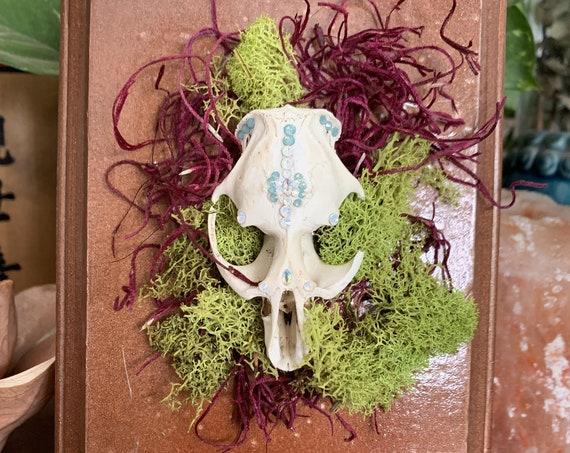 Bird Skull Adorned with Swarovski Crystals - GOREgeous Oddities