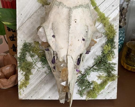 Crystalized Doe Skull - Wall Art - GOREgeous Oddities