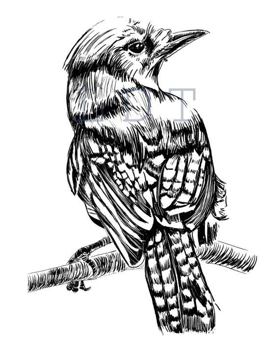 Blue Jay Illustration, Commercial Use, Clip Art, Illustration, Digital Stamp Transfer Image PNG JPG Formats
