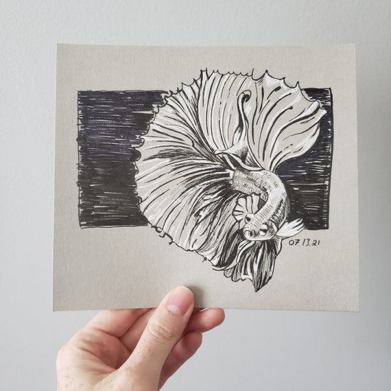 Sketch, Original Drawing, Betta Fish, Black and White Ink on Toned Paper