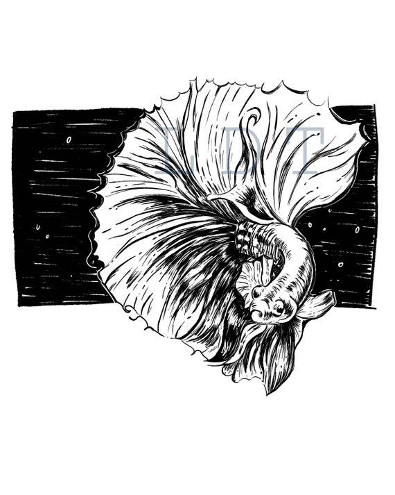 Betta Fish Illustration, Commercial Use, Clip Art, Illustration, Digital Stamp Transfer Image PNG JPG Formats