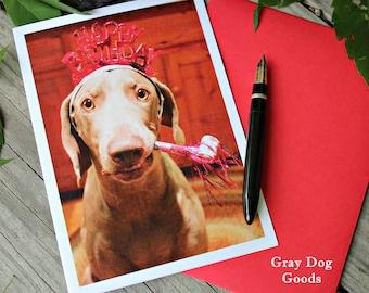 Dog Birthday Card, Dog Greeting Card, Weimaraner Card, Dog Photography, Birthday Dog