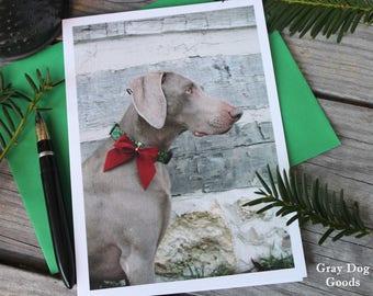 Dog Christmas Card, Dog Photography, Merry Christmas, Christmas Card, Weimaraner Greeting Card
