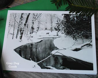 Holiday Card, Dog Photography, Christmas Card, Weimaraner Greeting Card, Winter Wonderland