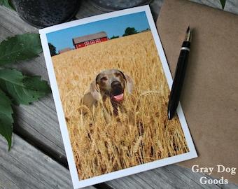 Dog Greeting Card, Dairyland Dog, Weimaraner Card, Dog Photography