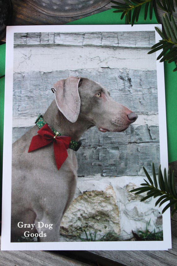 Dog Christmas Card Dog Photography Merry Christmas | Etsy