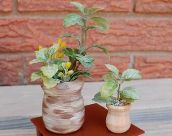 Miniature Plants Etsy