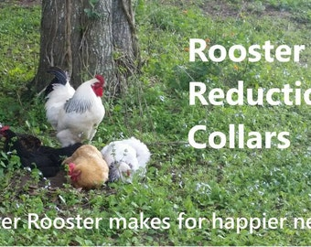 10 pack - randomly chosen, EXTRA WIDE Rooster Crow Reduction Collars