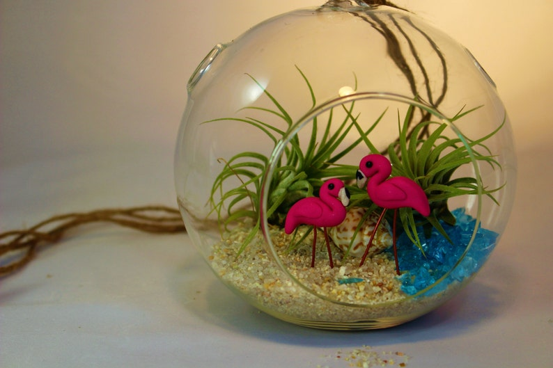 Diy Terrarium Kit Glass Globe Terrarium With 2 Tropical Etsy