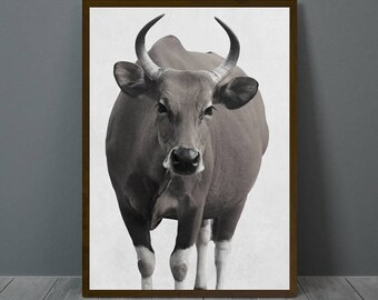 Cow Print, Cow Wall Decor, Cow Horn Poster, Cow, Animal Print Wall Decor, Printable Cow Wall Art