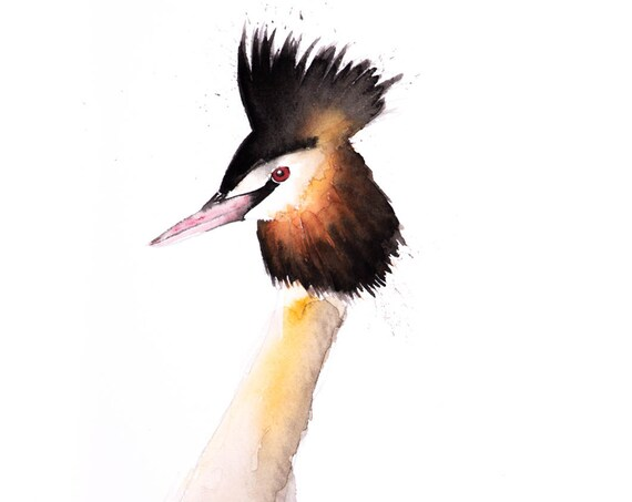 Great Crested Grebe No.1 - Signed Print from my original watercolour painting