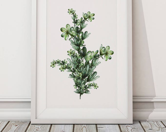 Botanical Leaf Print No.7 on Watercolour Paper - Fine Art Print of a Leaf Watercolour Painting