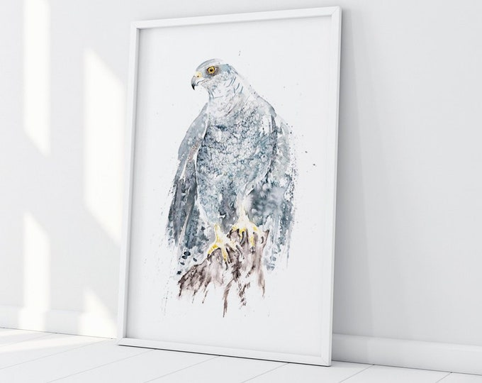 Goshawk Painting Watercolour Painting -  Limited Edition Print of my Goshawk Watercolour Painting Bird of Prey Painting
