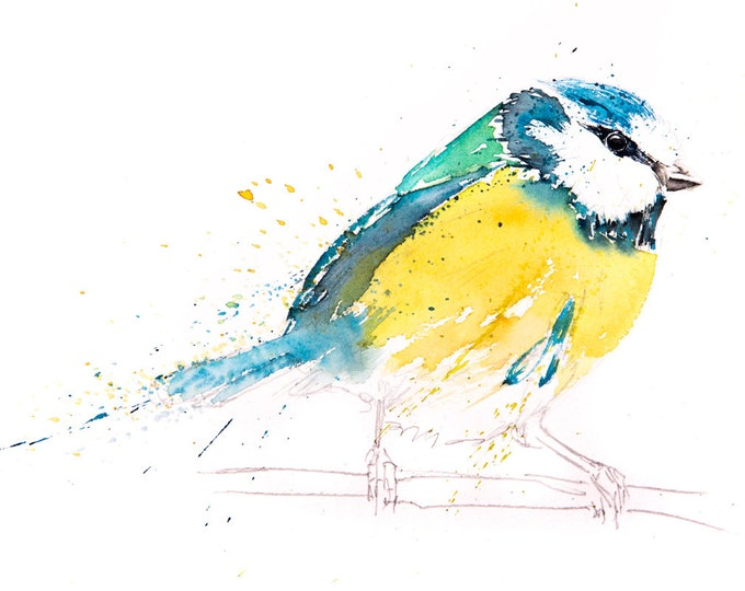 Blue Tit Painting No.11 - Hand Signed, Numbered, Dated and Embossed Limited Edition Print of my Watercolour Painting of a Blue Tit