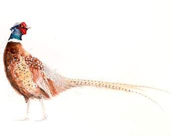 Pheasant Watercolor Painting Watercolour - Hand Signed Limited Edition Print of my Original Watercolour Painting of a Pheasant Bird Wall Art