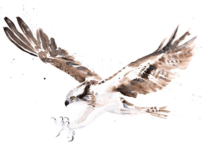 Osprey Painting Watercolour Painting -  Limited Edition Print of my Osprey Watercolour Painting
