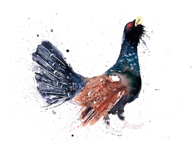 Cock-a-Hoot-Too - Signed Print of my original watercolour painting of a Capercaillie