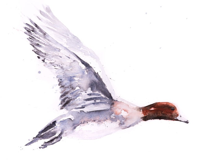 Widgeon Painting - Signed Limited Edition Print - Flying Duck Watercolour Painting - Abstract Modern Widgeon Duck Water Colour Painting