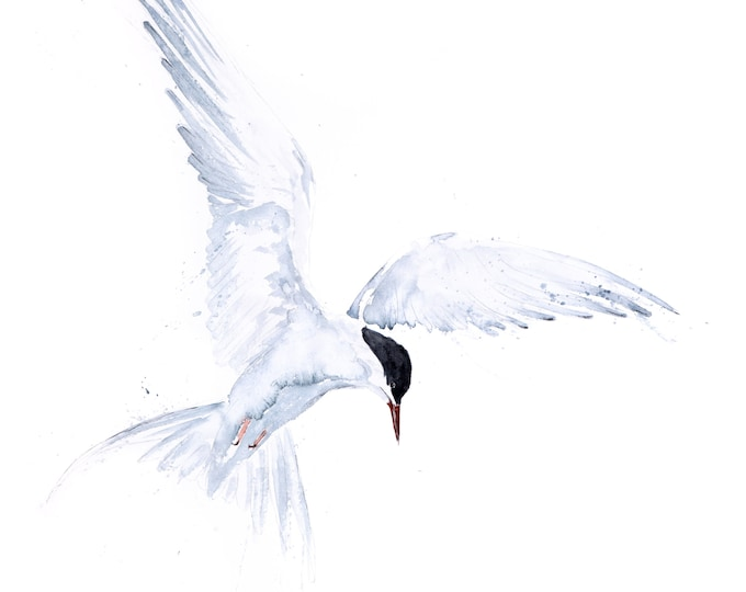 Flying Solo Arctic Tern Watercolour Painting - Hand Signed Limited Edition Print on Watercolour Paper of a Pair of Arctic Terns