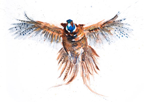 Flushed Pheasant Watercolour Painting - Hand Signed, Limited Edition Print of my Original Watercolour Painting of a Pheasant