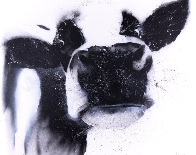 Street Art Cow Spray Painted Cow Graffiti Spray Painted Abstract Black & White Cow Hand Signed Limited Edition Print