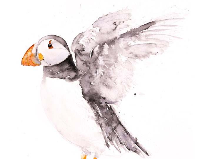 Puffin Watercolour Painting -  Wall Art  - Hand Signed, Numbered, Dated and Embossed Limited Edition Print of my Puffin Watercolor Painting