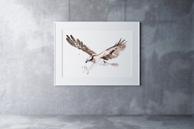 Osprey Painting Watercolour Painting Limited Edition Print of my Osprey Watercolour Painting