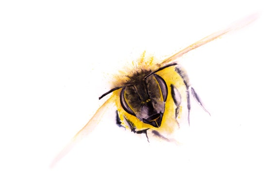 "Bee Painting ""Incoming"" - Signed limited edition print of my original watercolour painting of a honey bee"