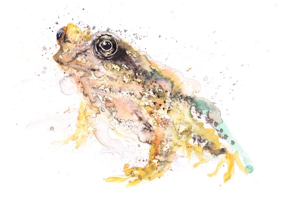 Frog No.1 - Signed limited edition print of my original watercolour painting of a common frog