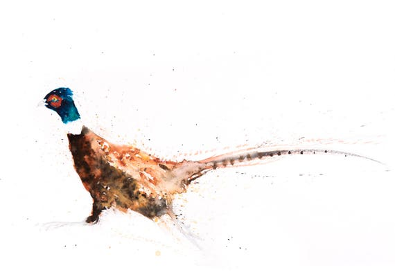 Pheasant no.9 - Signed, Limited Edition Print of my original watercolour painting of a Pheasant - Fine art animal prints  and paintings