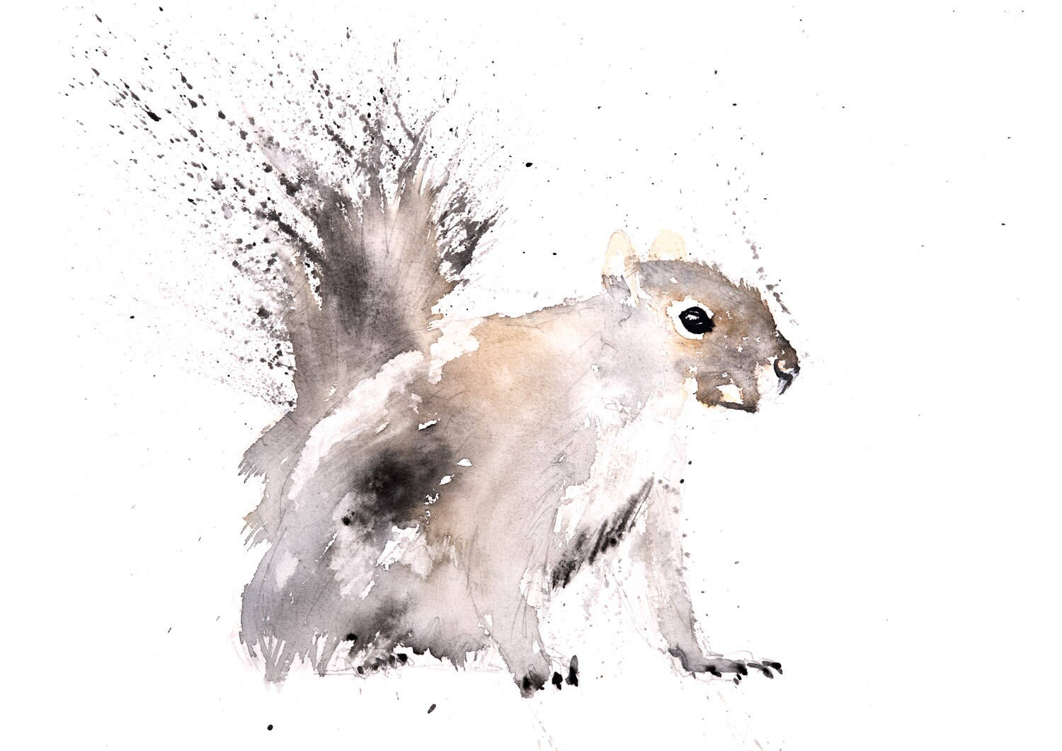 Grey Squirrel No 1 - Signed limited Edition Print of my Original