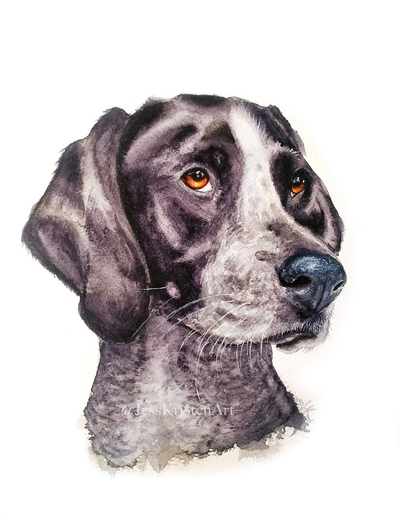 Hand-painted Watercolor German Shorthair Pointer Portrait from image 0