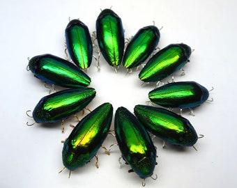 Free Shipping 10 pcs  Natural Beetle Wing Green Pin Brooch Fashion