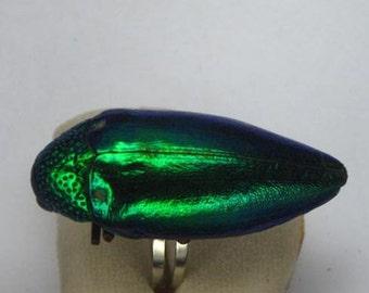 Free Shipping Natural Beetle Wing Green Ring Fashion
