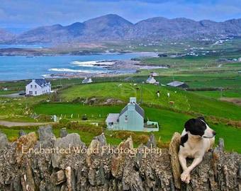 Irish dog print, Ireland photography, Dog art, Dog lover gift, County Kerry photo, County Cork print, Beara Ireland art print, Irish gift