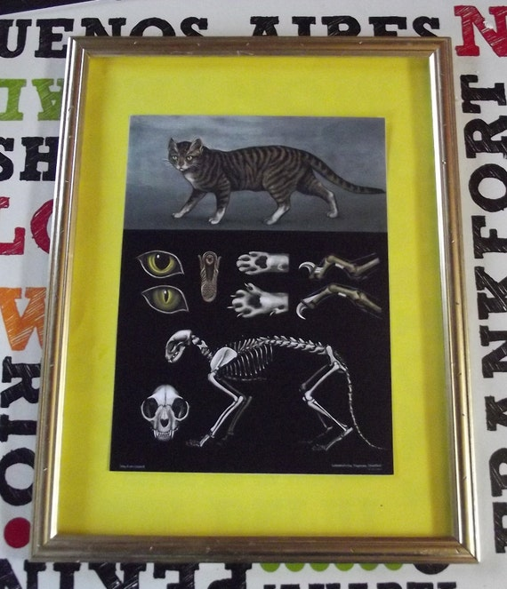 Old school poster zoology mammals Cat anatomy skeleton School | Etsy