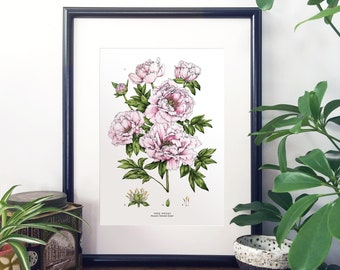 Botanical Illustration A4 Giclee Print - Tree Peony